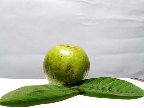 Guave bereiden